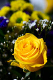Yellow roses  bouquet Stock Image