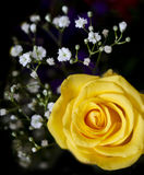 Yellow roses  bouquet Stock Photos