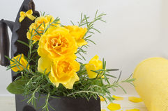 Yellow roses bouquet with rosemary  in a vintage iron as vase Royalty Free Stock Photo