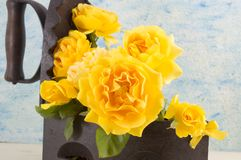 Yellow roses bouquet in a vintage iron as vase against blue back Royalty Free Stock Images
