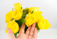 Yellow roses. Bunch of yellow roses and female hand touching, on white Royalty Free Stock Photography