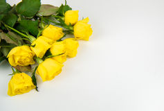 Yellow roses. Bunch of yellow roses on white, space for text Stock Images