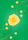Yellow roses with curls on green background Royalty Free Stock Image