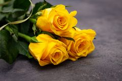 Yellow roses on on dark background.  royalty free stock image