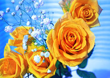 Yellow roses flower bouquet royalty free stock photo