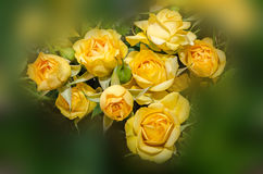 Yellow roses flowers close up, texture, floral arrangement Stock Images