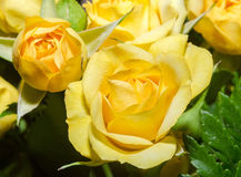 Yellow roses flowers close up, texture, floral arrangement Stock Photos