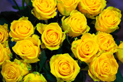 Yellow roses flowers, floral background for mothers day, wedding Royalty Free Stock Images