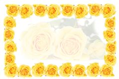 Yellow roses frame. Bunch of yellow roses  isolated on the white bachground fraim Royalty Free Stock Image