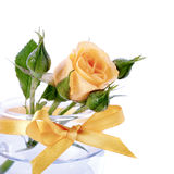 Yellow roses. Royalty Free Stock Images