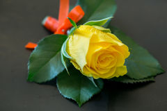 Yellow Roses For the groomsman. Yellow Roses For the groomsman in the wedding stock images