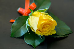 Yellow Roses For the groomsman. Yellow Roses For the groomsman in the wedding royalty free stock photos