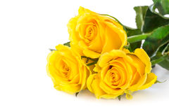 Yellow roses. Over white background Royalty Free Stock Photography
