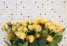 Yellow roses with polka dots Stock Photos