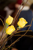 Yellow Roses. Some yellow roses with sticks Royalty Free Stock Photos