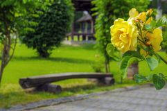 Beautiful green parks for relaxation stock photos