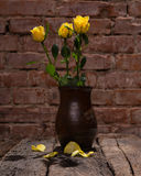 Yellow roses in vase Stock Image