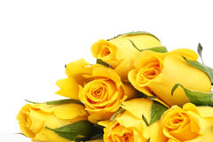 Yellow roses with water drop Stock Photo
