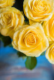 Yellow roses with water drops on it Stock Images