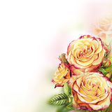 Yellow  roses watercolor background Royalty Free Stock Photos