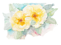 Yellow roses watercolor vector illustration Stock Images