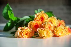 Yellow roses on a white wooden table. Holidays and celebration concept stock photos