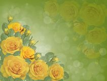 Yellow roses. Yellow roses on a green background Stock Photography