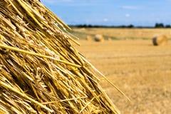 Yellow Round Straw Bale Close Up Stock Image