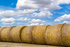 Yellow Round Straw Bales and Blue Sky. Rows of fresh yellow straw bales with a blue sky and white coud background Stock Photo
