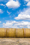Yellow Round Straw Bales and Blue Sky. Rows of fresh yellow straw bales with a blue sky and white coud background Royalty Free Stock Photos