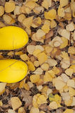 Yellow rubber boots on a background of  autumn leaves Stock Image