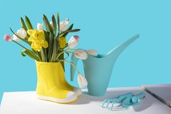 The Yellow rubber boots with a bouquet of flowers of yellow daffodils and white and pink tulips on white wooden table on the viole. Yellow rubber boots with a stock photography