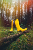 Yellow rubber boots in the forest. Yellow rubber boots in a Sunny forest lying on the green grass Stock Image