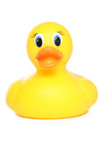 Yellow rubber duck. Studio cutout stock photo