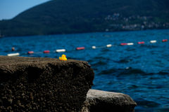 Yellow rubber duck at Adria sea beach Royalty Free Stock Photos
