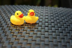Yellow rubber duck on a background of black wooden. Stock Images