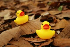 Yellow rubber duck on background of brown leaves. Stock Photos