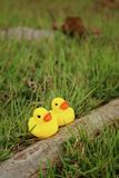 Yellow rubber duck on a background of green grass. Royalty Free Stock Images