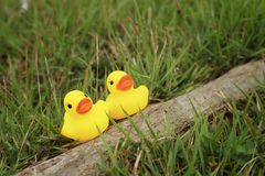 Yellow rubber duck on a background of green grass. Stock Image
