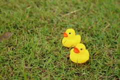 Yellow rubber duck on a background of green grass. Stock Photography