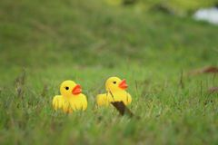 Yellow rubber duck on a background of green grass. Stock Images