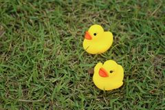 Yellow rubber duck on a background of green grass. Royalty Free Stock Photos