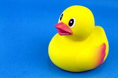 Yellow rubber duck on blue background. Royalty Free Stock Photo