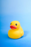 Yellow rubber duck on blue background water Royalty Free Stock Photography