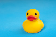 Yellow rubber duck on blue background water Stock Photos