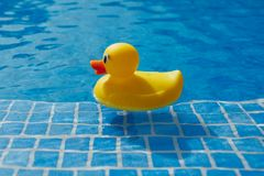 Yellow rubber duck in blue swimming pool Stock Photography