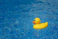 Yellow rubber duck in blue swimming pool. Closeup view Royalty Free Stock Photo