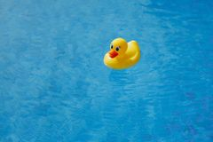 Yellow rubber duck in blue swimming pool Royalty Free Stock Photo