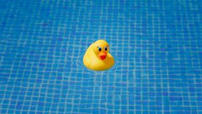 Yellow rubber duck in blue swimming pool. Closeup view Royalty Free Stock Photos