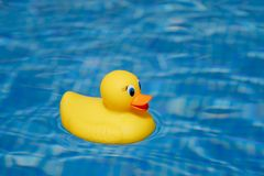 Yellow rubber duck in blue swimming pool. Closeup view Stock Images